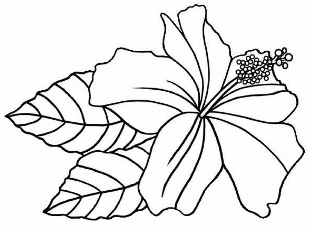Hibiscus Flower Printable Coloring Sheets Floriculture Flower