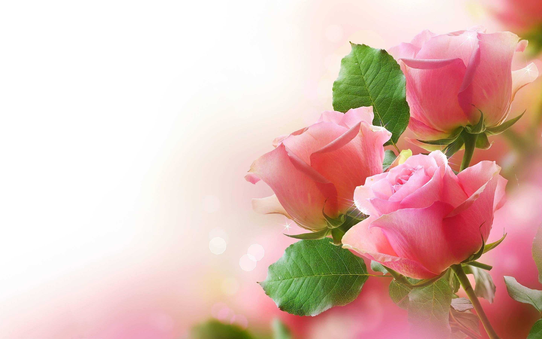 Wallpapers Pink Roses Wallpaper