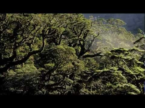 Of Forests & Men - Yann Arthus Bertrand - Narrated By Edward Norton