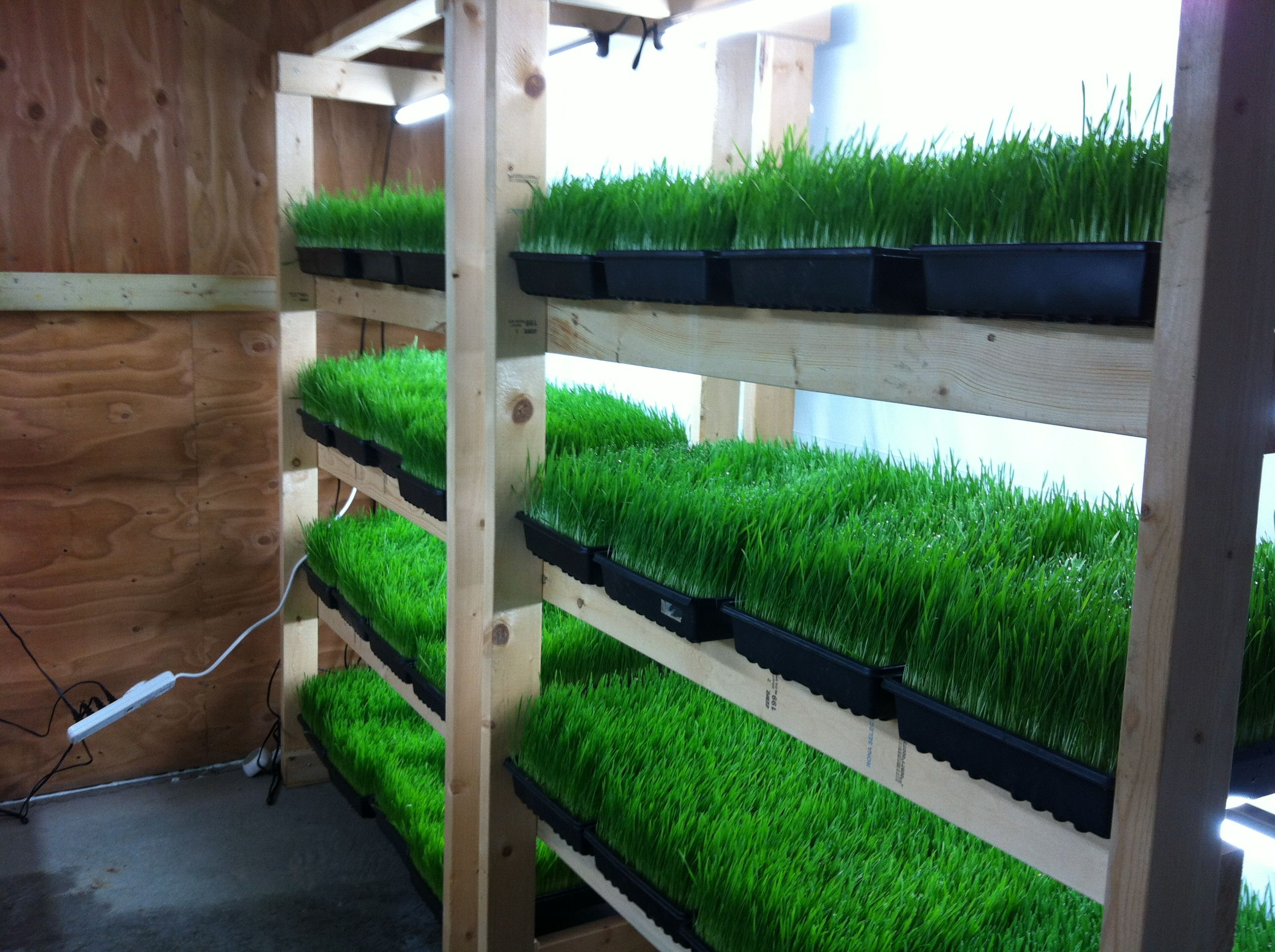 microgreens Google Search Apartment aquaponics