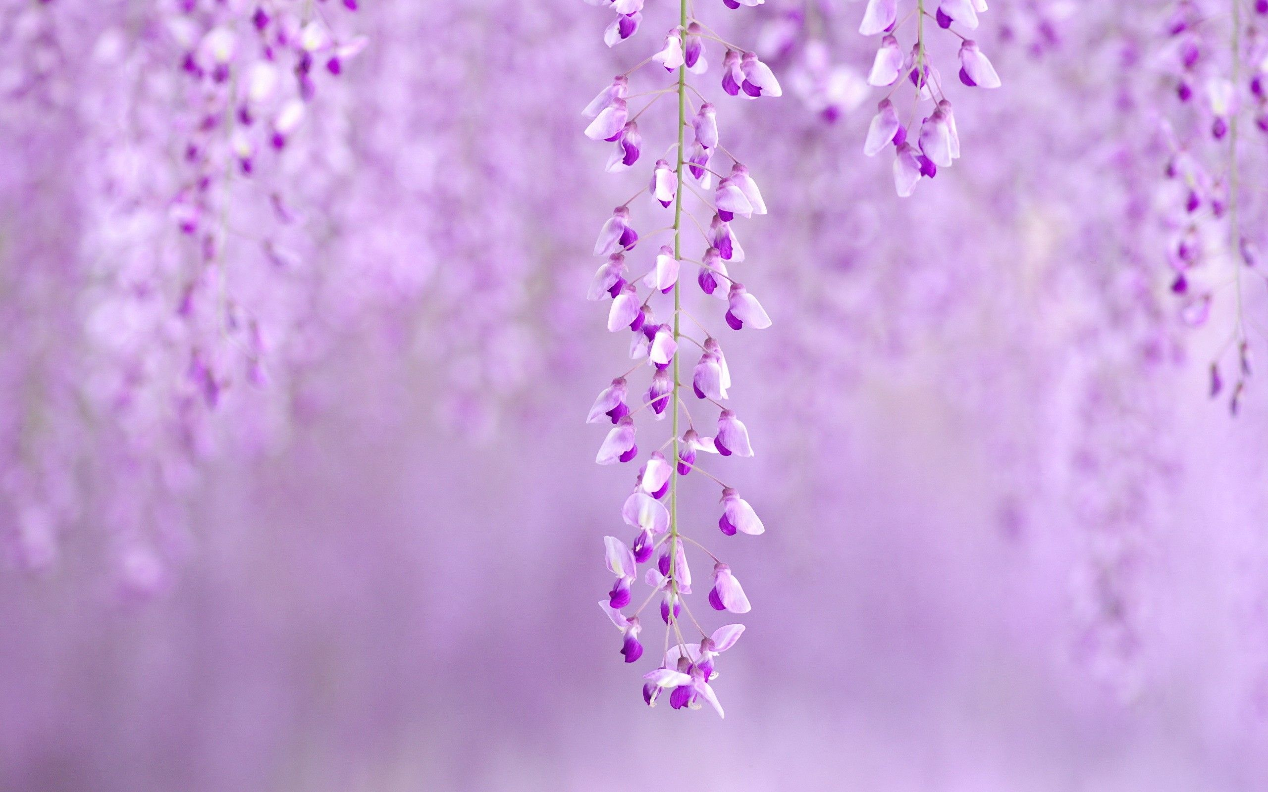 I Love Purple Wallpapers Hd Free 223915 Spring Flowers Background Purple Flowers Wallpaper Spring Flowers Wallpaper