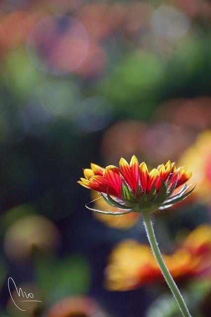 Un día de primavera cualquiera en el Park Güell: [Exif: 1/640 s; f 5,6; 200mm; ISO 400; 0 EV; Iluminación: Luz del sol directa.]