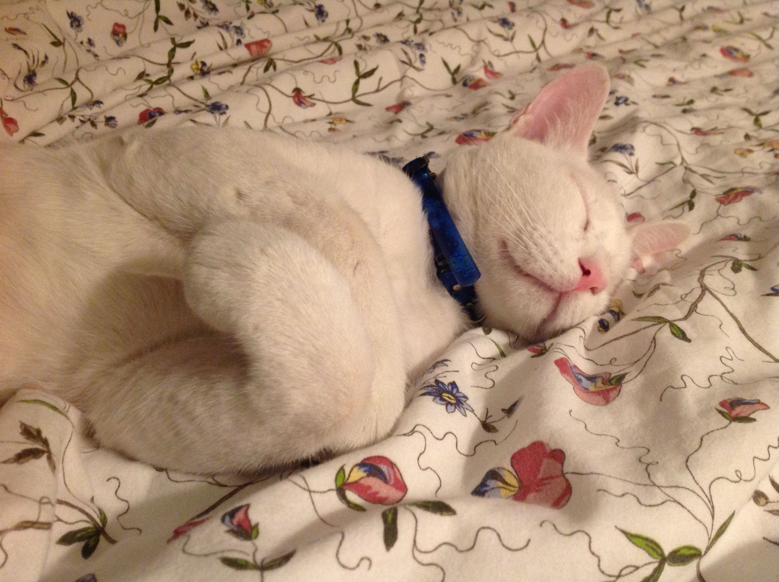 Blue is a handsome, one eyed cat, who now has a comfy bed