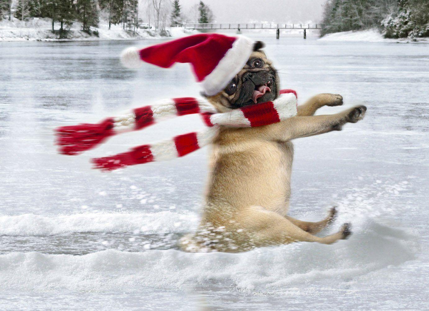 Funny pug christmas card pug sliding on ice pug