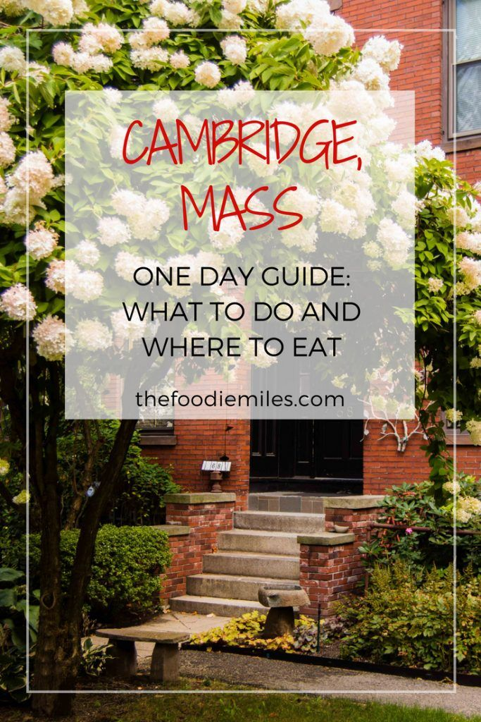 Best Things To Do In Cambridge Massachusetts In One Day With