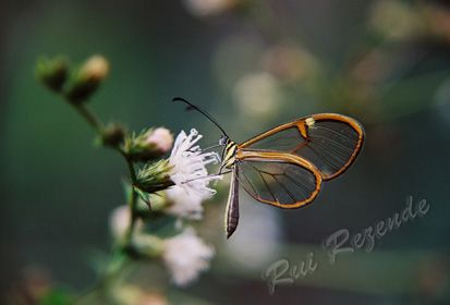 Fotos da Chapada Diamantina por Rui Rezende
