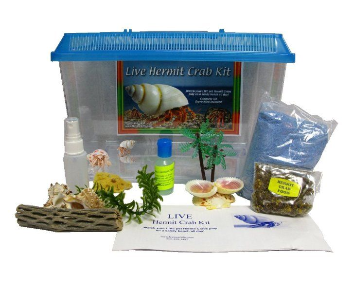 Live Pet Hermit Crab Complete Kit Shipped With 2 Live Crabs