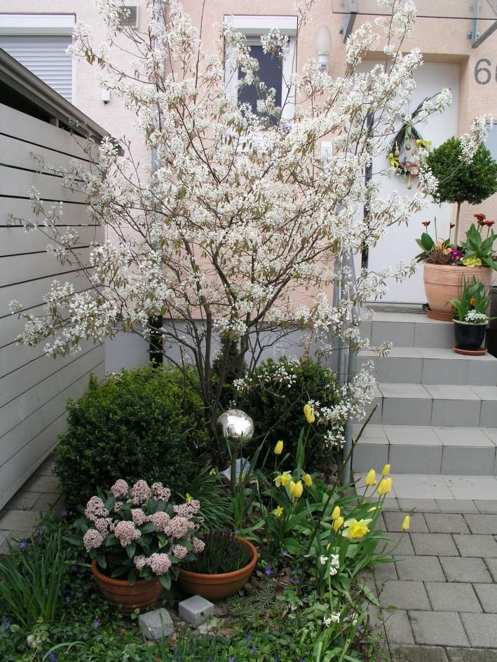 felsenbirne z hrada garden terrace garden und garden. Black Bedroom Furniture Sets. Home Design Ideas
