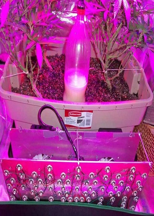 do it yourself garden lighting grow lights explained cfl led and hps easy and cheap to efficient