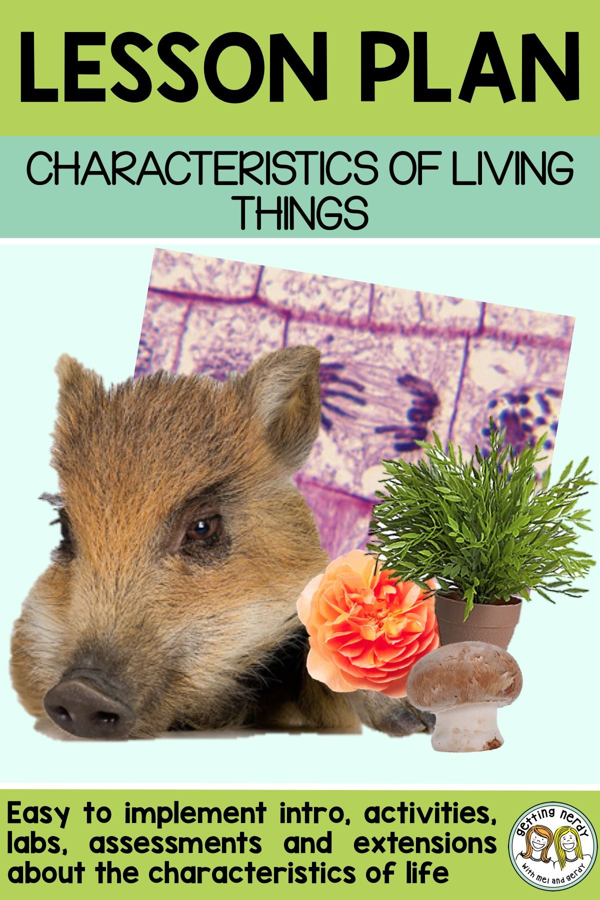 Lesson Plan The Characteristics Of Living Things
