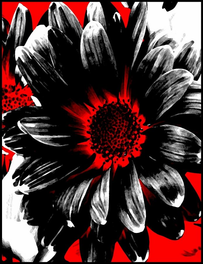 Red black and white art black daisy photograph abstract red white and black daisy fine art