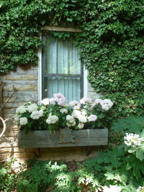 Shed window box~