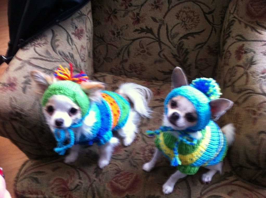Paxton and Herbie all dressed for their winter walk.
