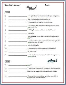 Dogfish Shark Dissection External