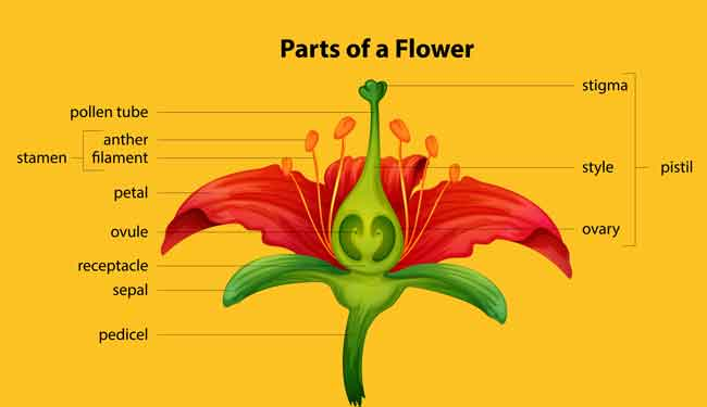 Pollination Kids Growing Strong in 2020 Parts of a