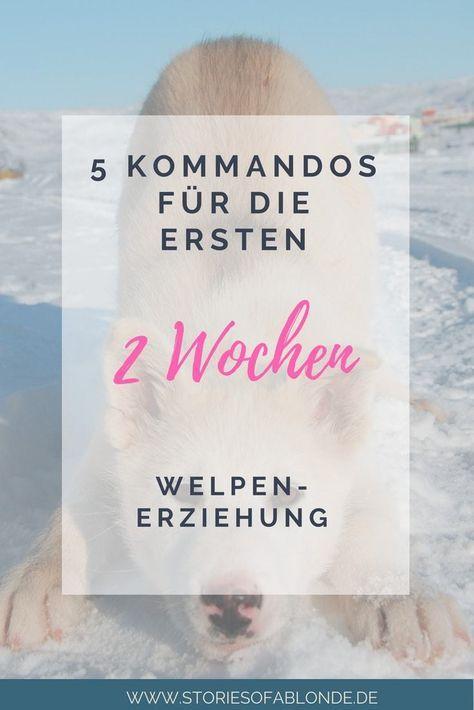 Photo of Die ersten 5 Grundkommandos für Deinen Welpen – Stories of a Blonde