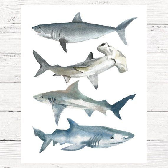 Shark Watercolor Print Shark Nursery Boys Shark Room Shark Etsy Shark Room Shark Nursery Shark Boys Room