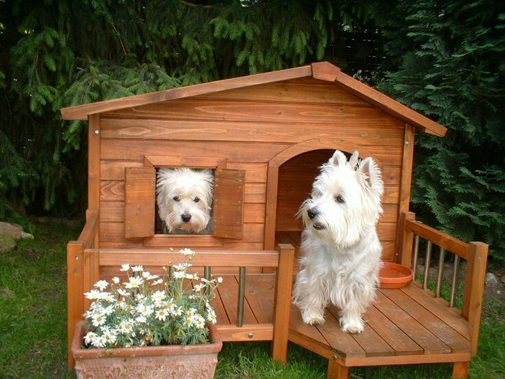 Image may contain dog, plant and outdoor Westies