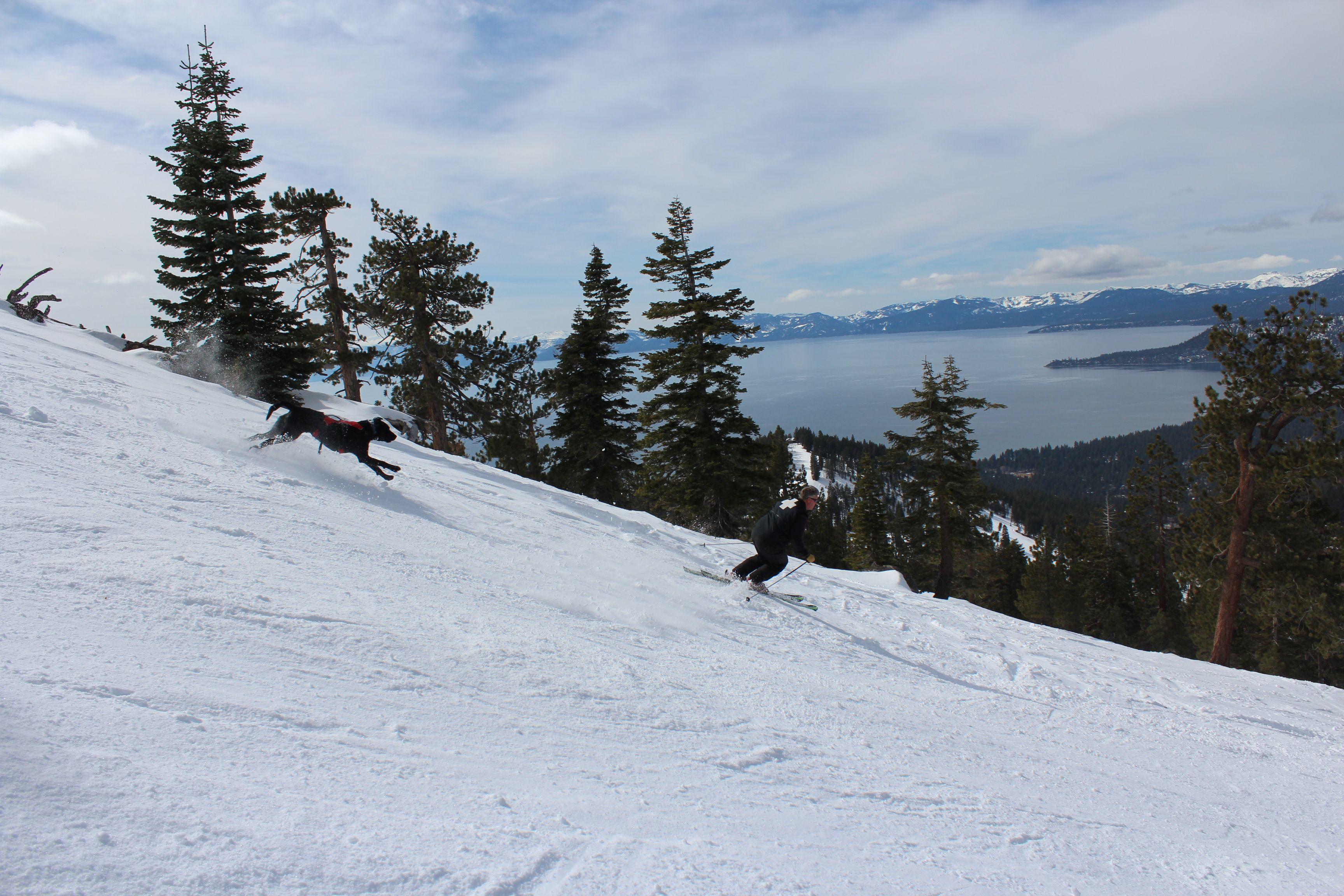 Ski Patrol Dog Thunder And Dennis Ski Resort Skiing