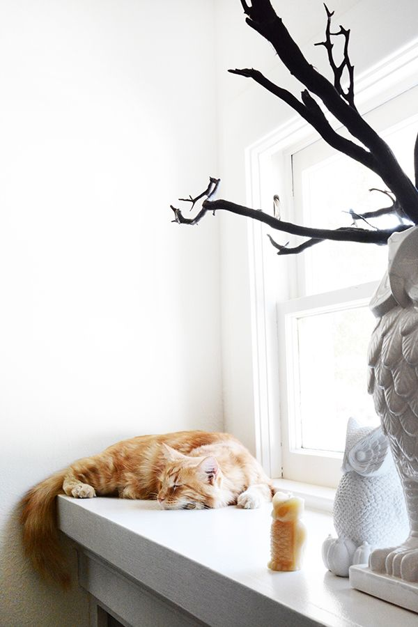 Modern Halloween Decor modern halloween decorations in black and white | orange cats