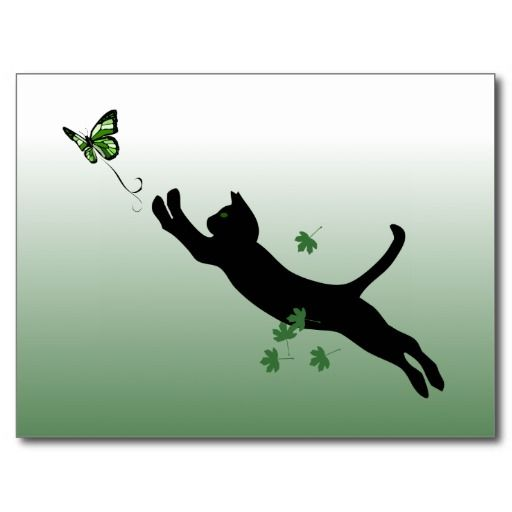 The Cat & The Butterfly Post Card