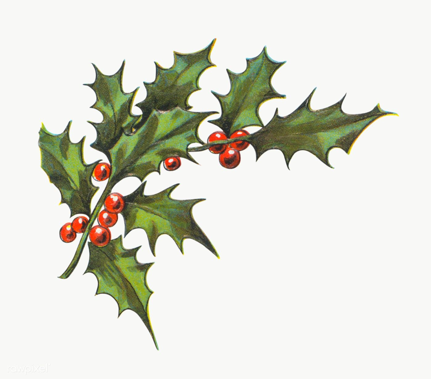 Festive Holly Leaves Transparent Png Premium Image By Rawpixel Com Nam Christmas Holly Images Holly Images Christmas Tattoo