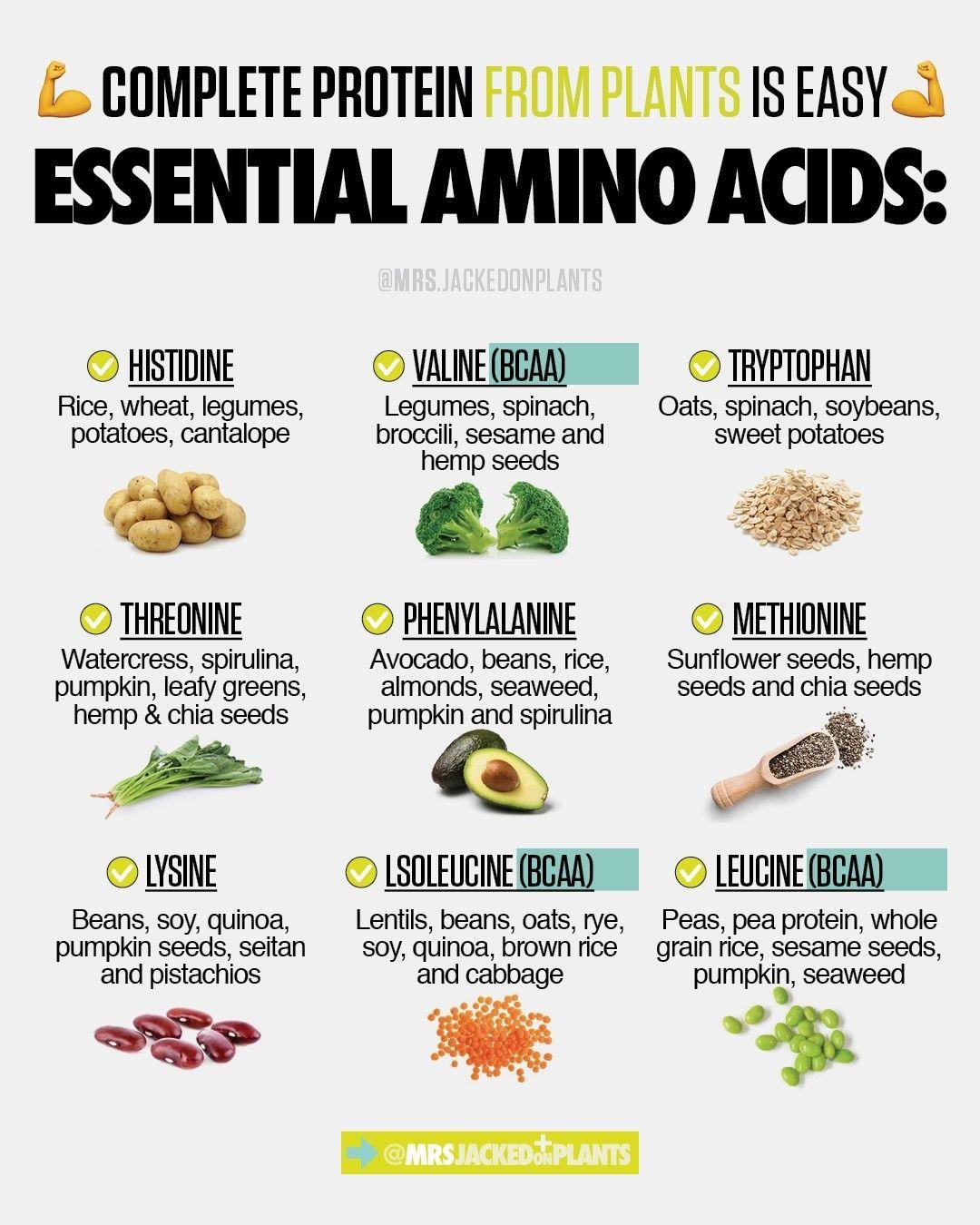98fe0a71957fa7e8a702b912f497f5c0 - How To Get All Your Amino Acids As A Vegan