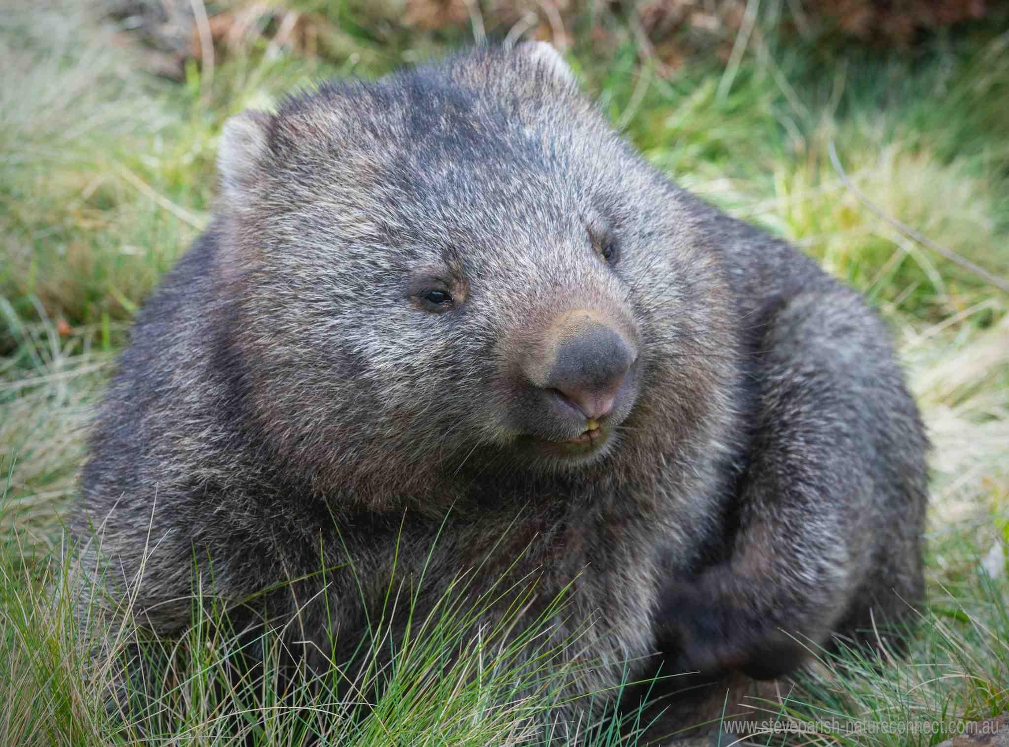 Australian Fauna - Steve Parish Nature Connect | Australian fauna, Animals,  Animal pictures
