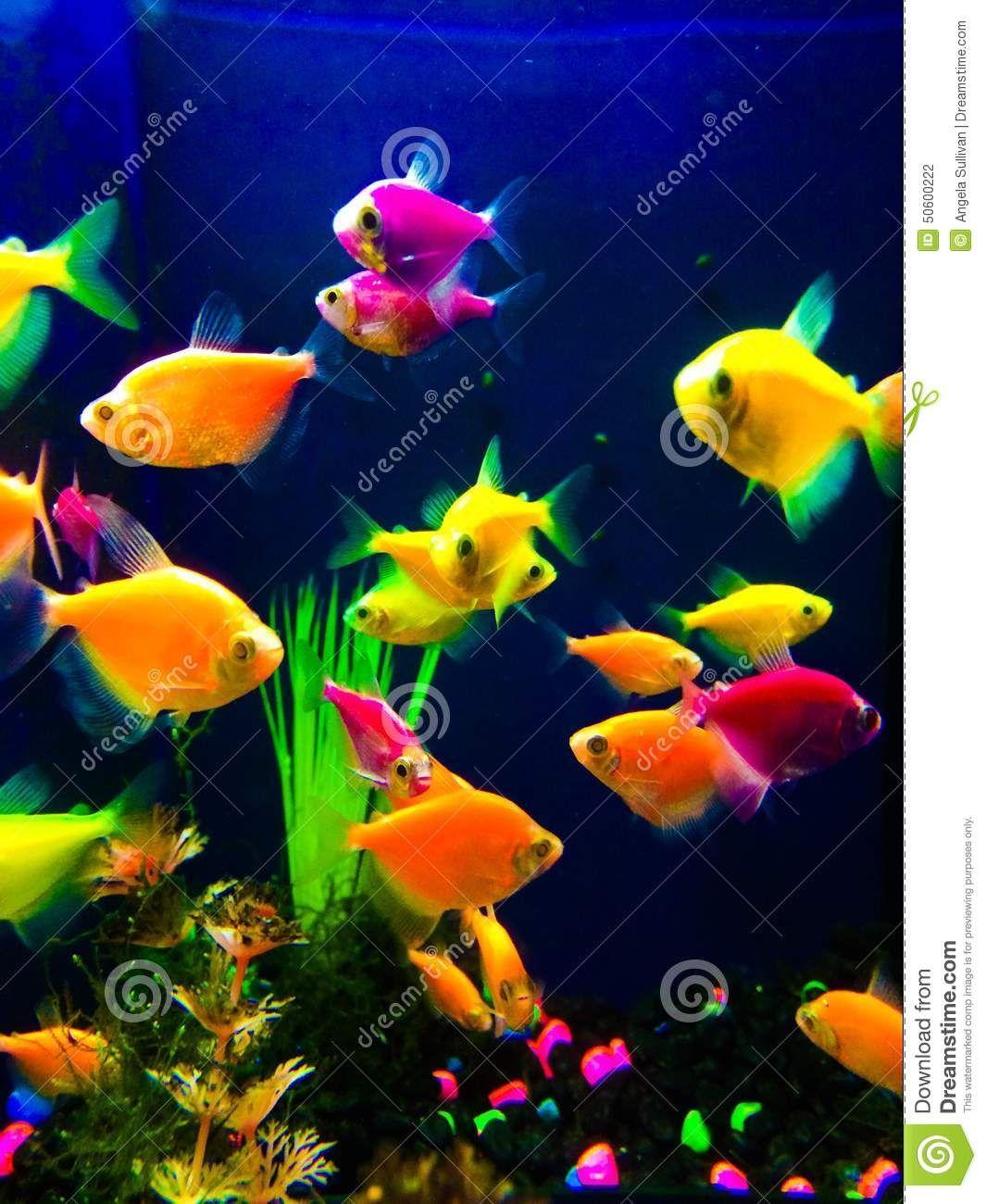 Freshwater aquarium fish neon - Neon Bunte Fische Aquarium