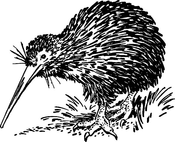 Hungry Kiwi Bird Looking For Food Coloring Pages Download Print Online Coloring Pages For Free C Food Coloring Pages Coloring Pages Online Coloring Pages
