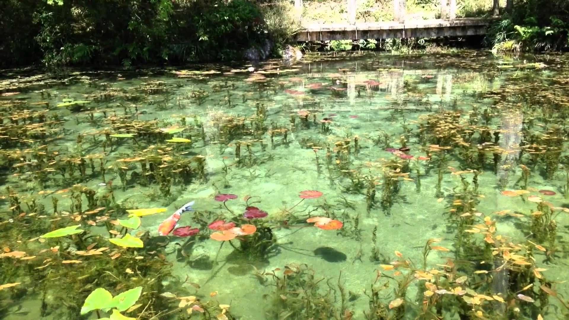 【絶景】岐阜県関市の睡蓮の池【モネの池】 | 写真 | モネの池 ...