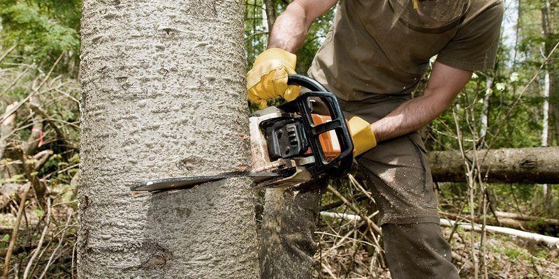 Tree Services Atlanta Tree removal, Tree service, Tree