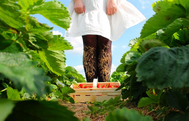 Scènes de la vie: Strawberry fields forever