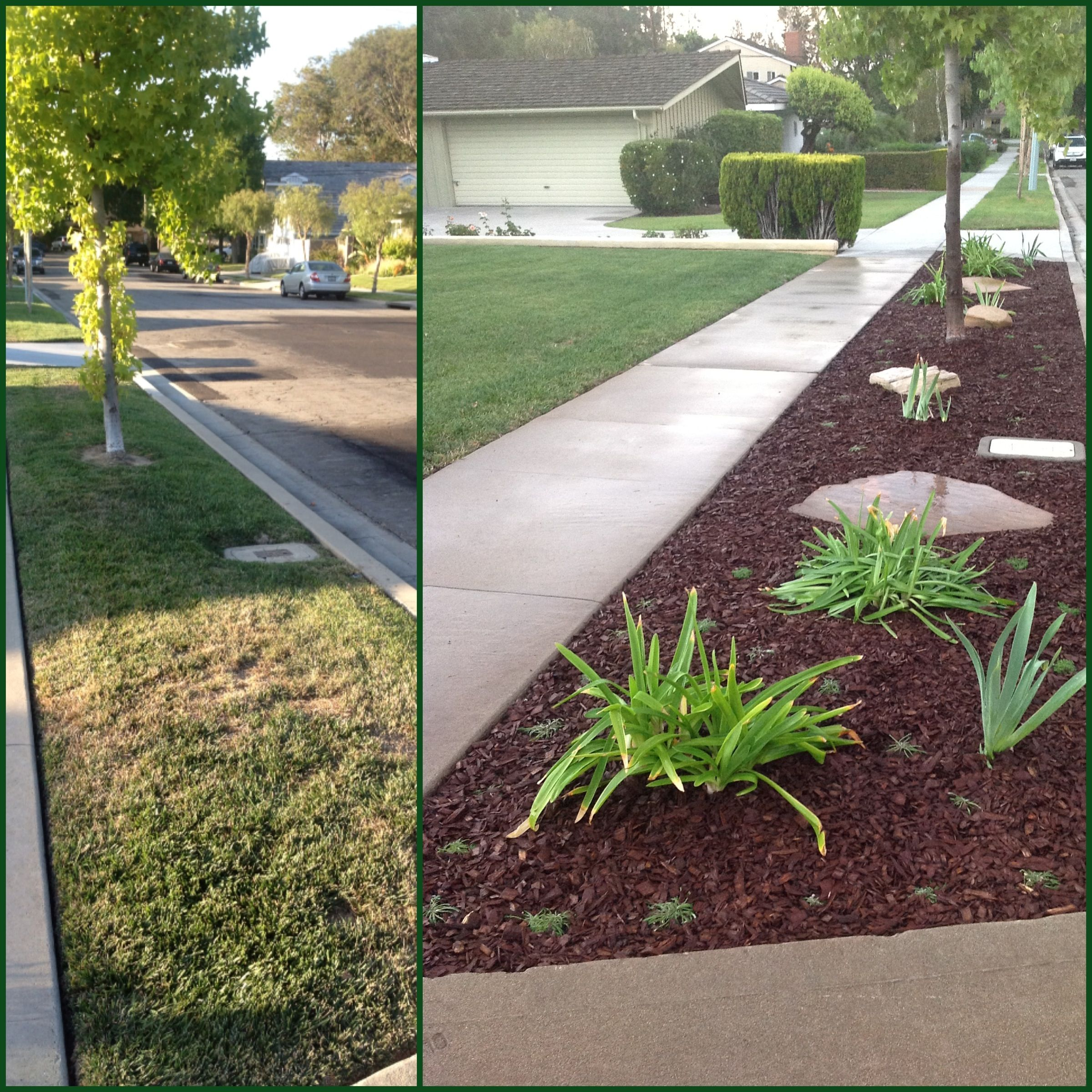 Drought Tolerant Front Yard: Grass Parkway Turned Drought Tolerant