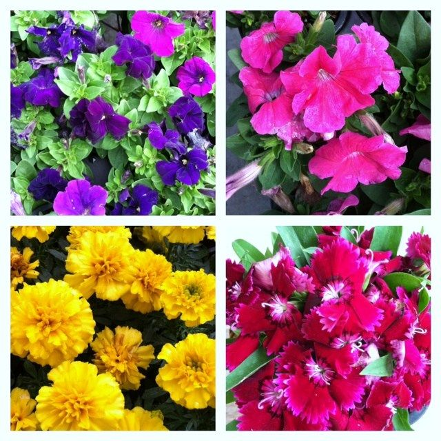 Haiku Flower in Bloom Plants and Gardening Spring