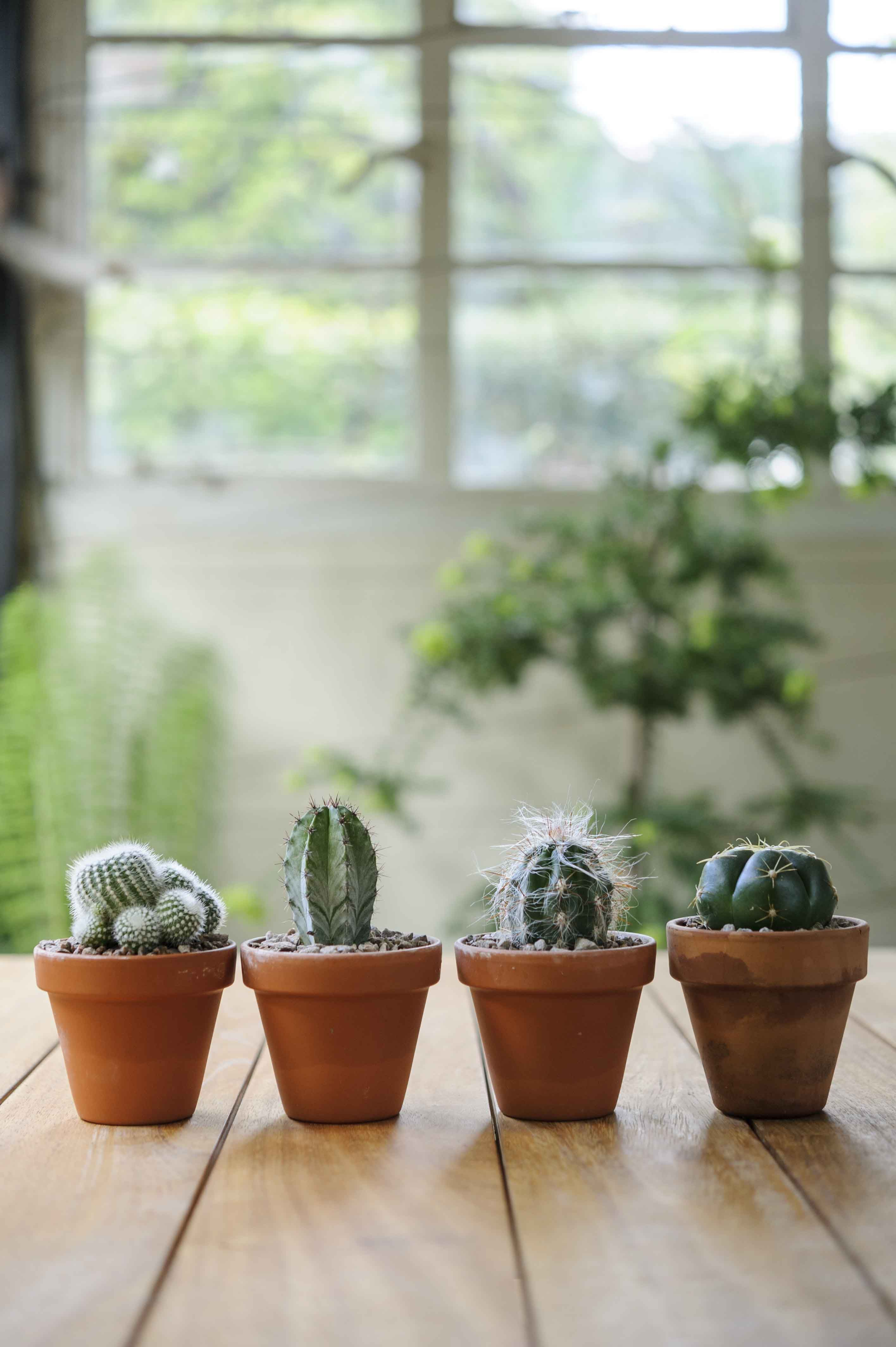 Cacti Make Ideal House Plants And They Re Easy To Grow Look After Your Cactus With These Top Tips