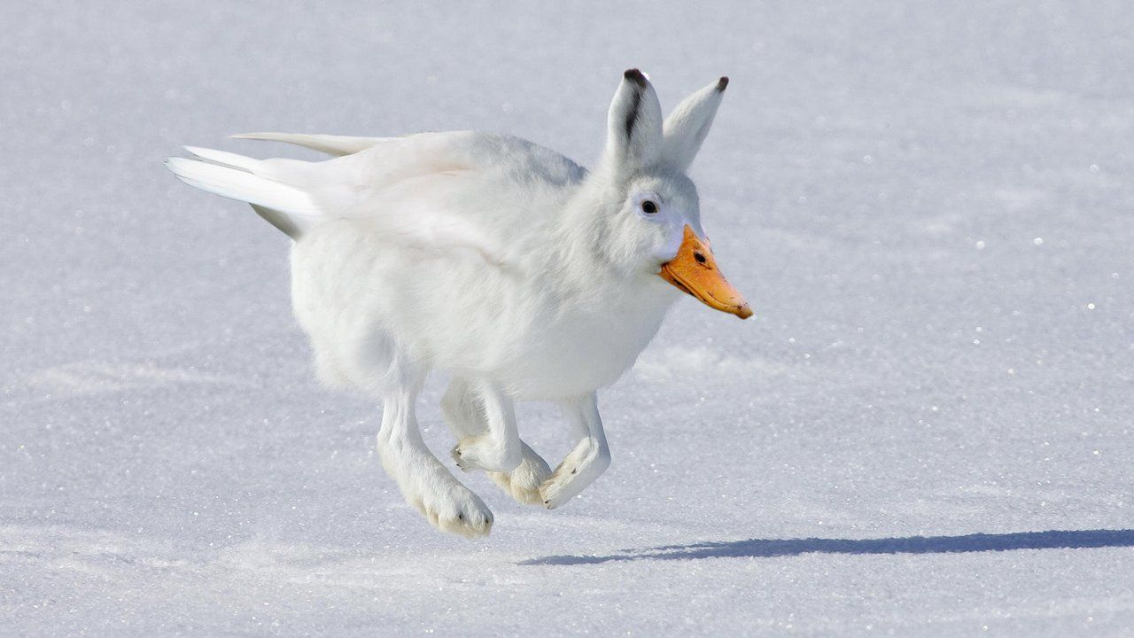 Miguel Bravo — Rack #hybrid #animal #weird   Photoshopped animals, Weird  animals, Animal mashups