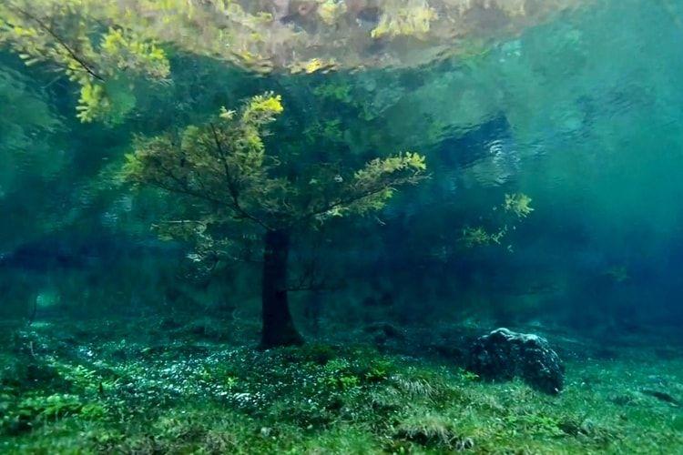 La forêt submergée de Tragoss en Autriche