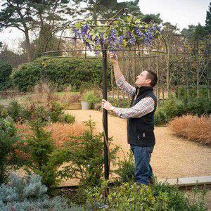 Wisteria Umbrella Plant Support Harrod Horticultural Garden Pond Design Plant Supports Plants