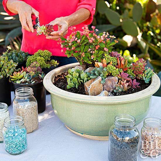 Make a Mini Succulent Garden in a Pot