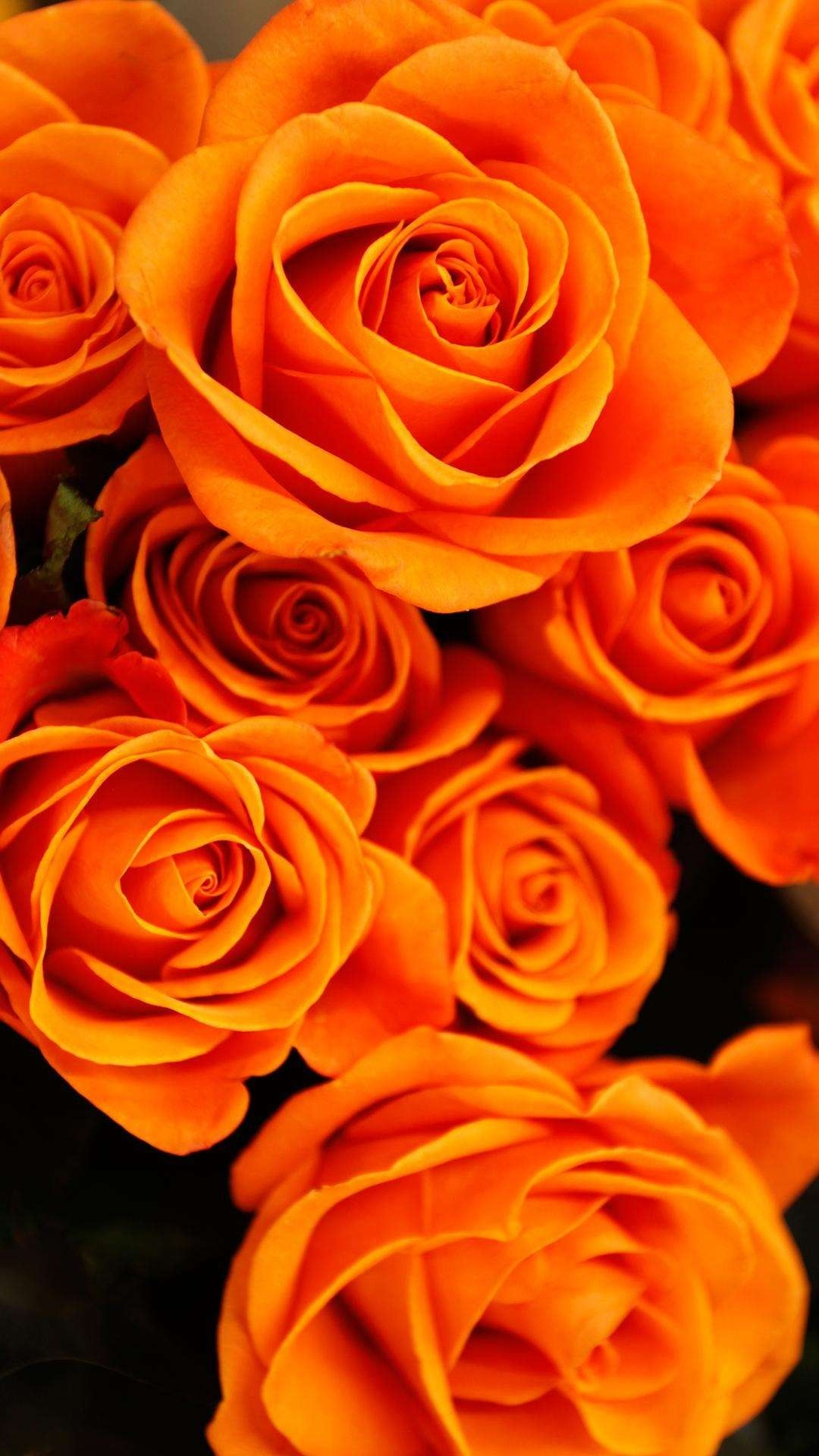 Pin by Paradora on Wallpapers | Flower aesthetic, Orange ...