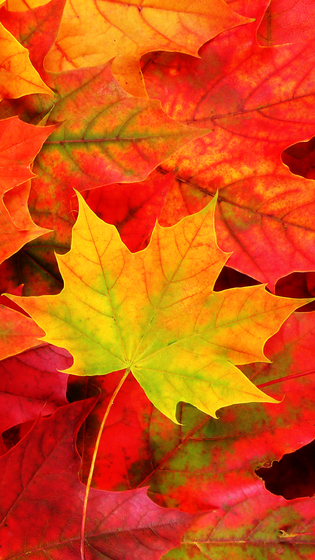 Fall Five iPad 5 Wallpaper Autumn leaves wallpaper