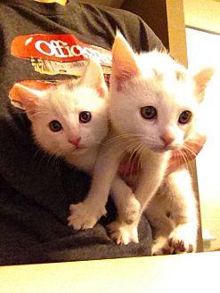Adopt A Pet Petsmart Charities In 2020 Pets Pet Adoption Adoption