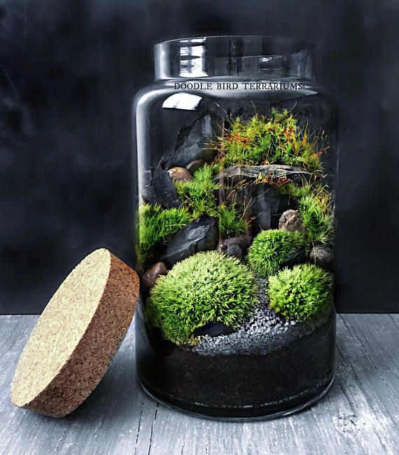 Gift Plants And Plant Ideas Perfect Container Garden For You: Waterfall Terrarium With Live Moss Plants In Hex Glass Jar