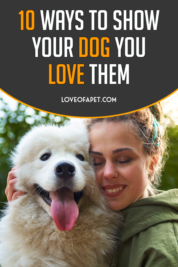 How To Show Your Dog You Love Them 10 Way Love Of A Pet Your Dog Dog Love Dog Care