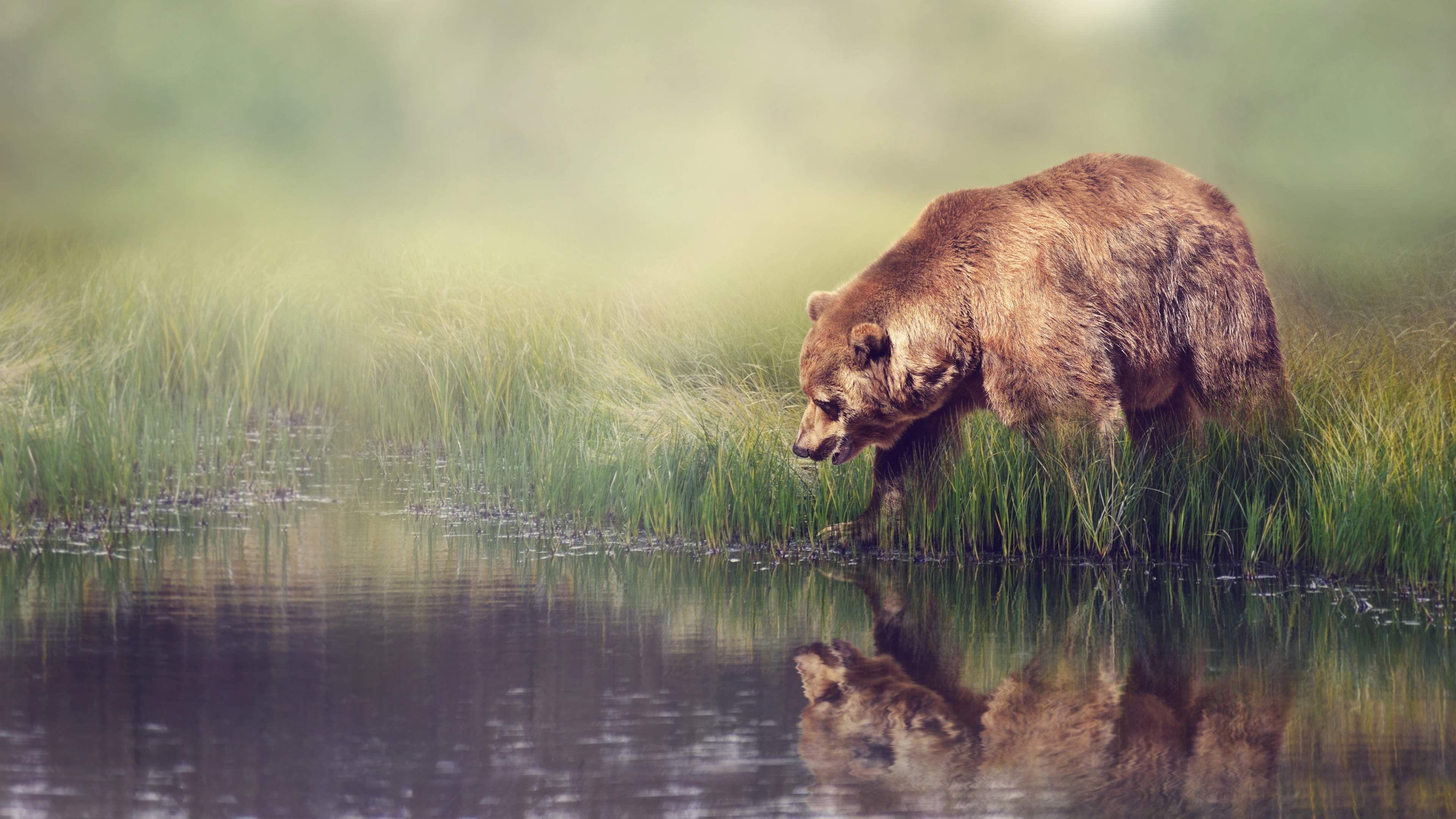 grizzlybearanimal4kwallpaper.jpg (3840×2160)