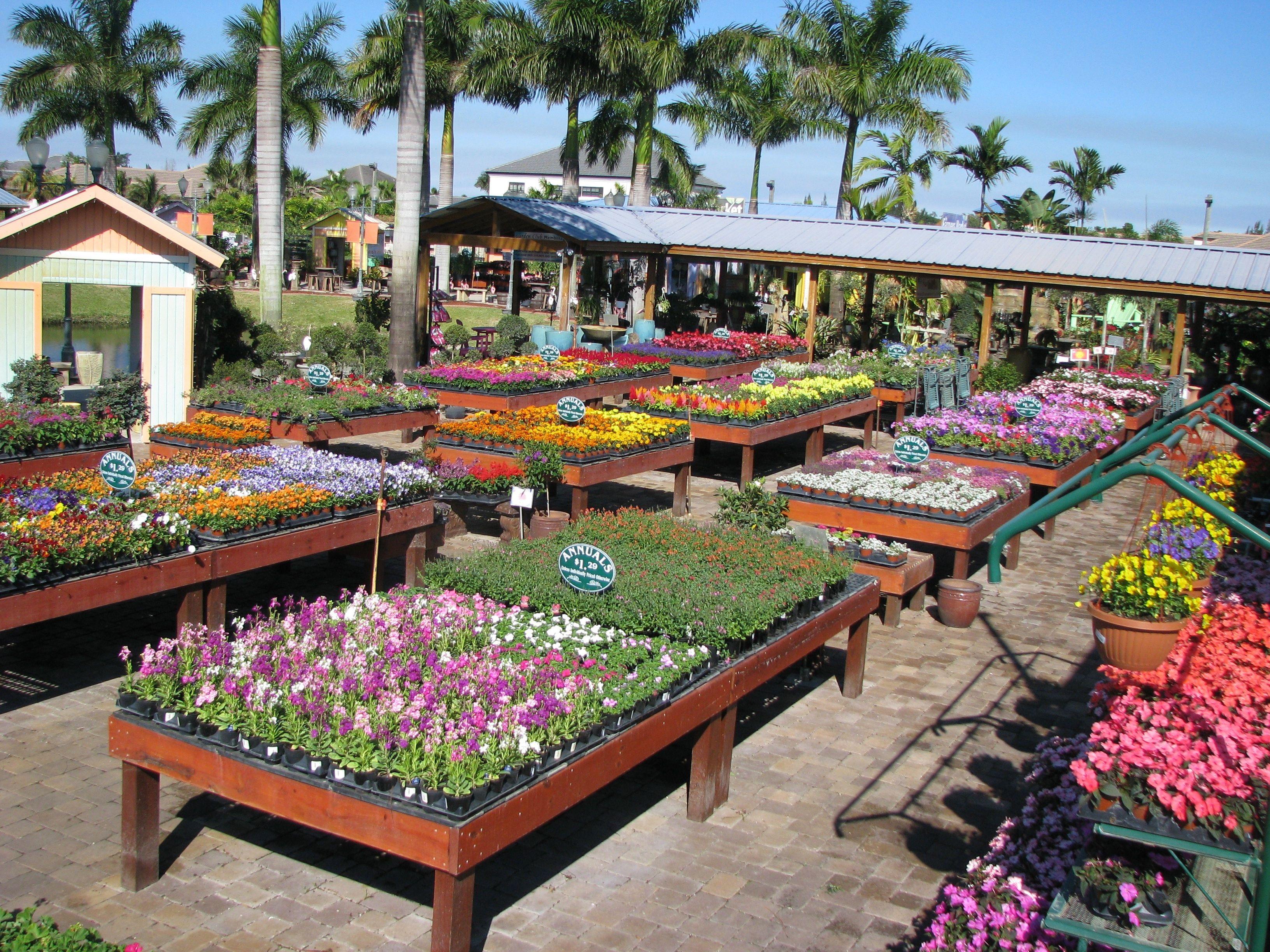 Annual Plant Tables Ideas De Jardineria Vivero Tiendas De Plantas
