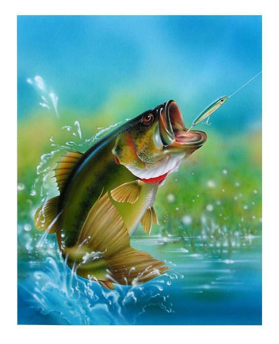 Pin By Andrea Bibee On Art In Many Ways Fish Painting Bass Fishing Pictures Fish Drawings