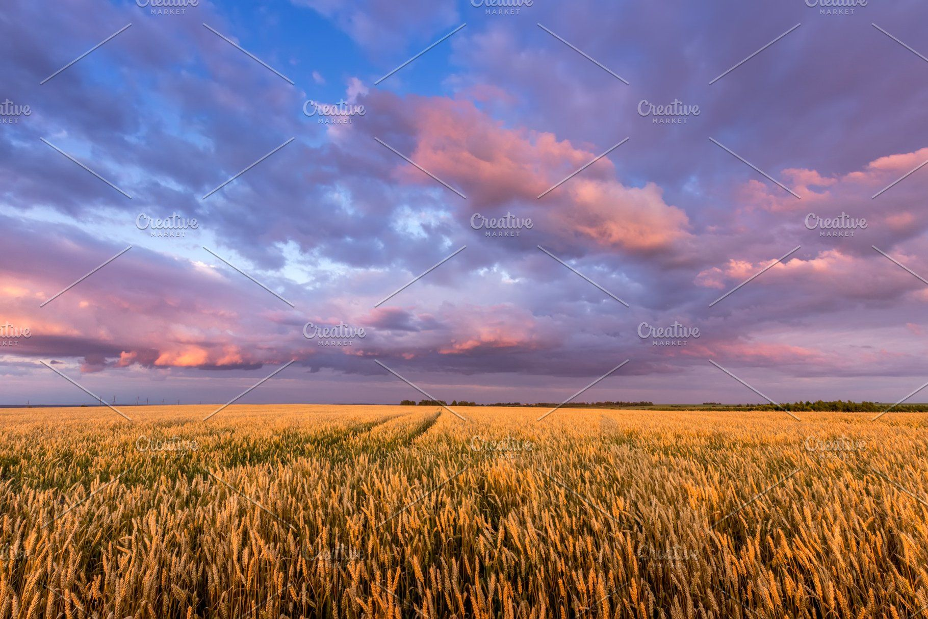 Twilight On A Wheat Field Sky Landscape Nature Photos Landscape
