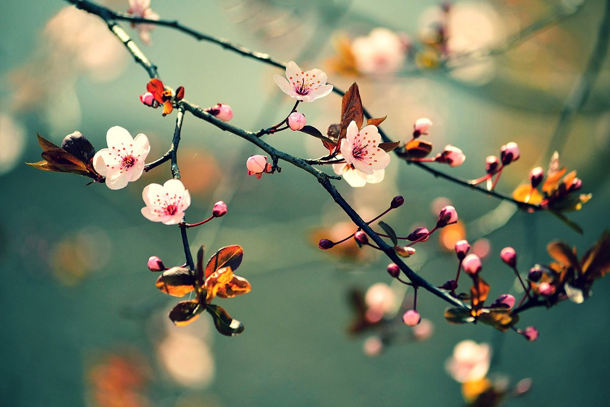 When There Is Full Participation There Is No Force Force Is Extra It S Not Needed In The Absence Of Understanding We Thin Japanese Cherry Art Canvas Art